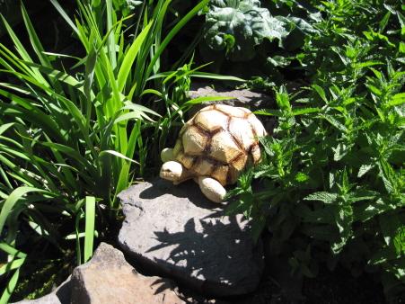 Ploughshare Tortoise Sculpture