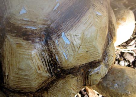Paper Mache Tortoise Shell